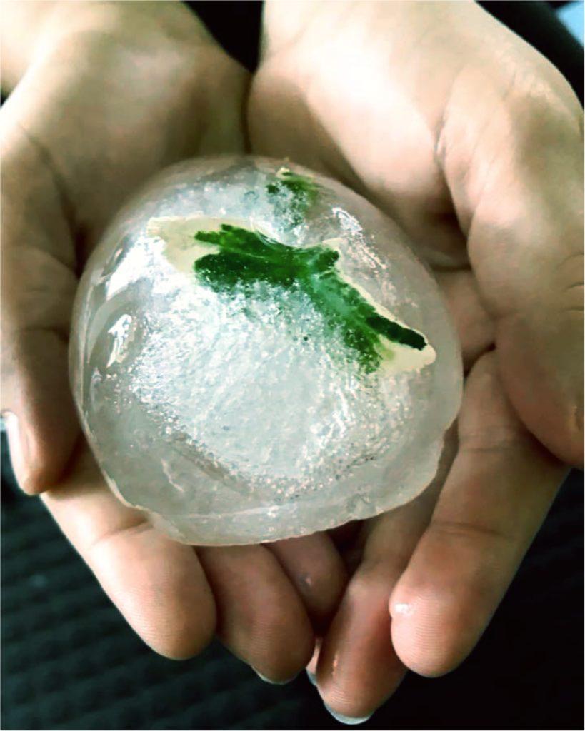 zwei Hände halten eine Kugel aus Eis, in der eine kleine Pflanze eingefroren ist